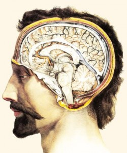 brain-anatomy@1x-629519194e
