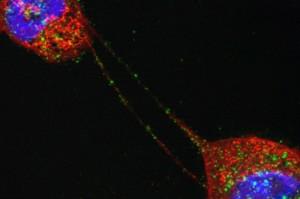 cell-signaling-regulation1200x800