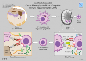 440px-11_Hegasy_CTLA4_PD1_Immunotherapy